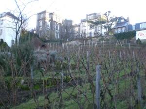 kim vineyard 1