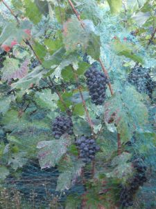kim-wine-fair-3